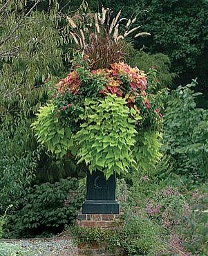 Obsadzamy Doniczki Kwiaty Ogrodowe