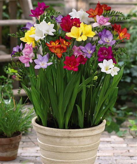 W Donicy Kwiaty Ogrodowe
