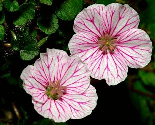 kwiaty-gatunek