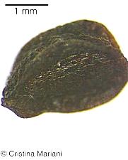 nasionko