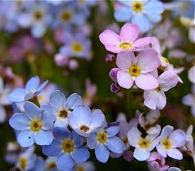 niebieski i różowy
