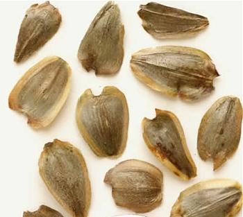 nasiona