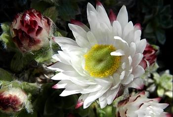 kwiaty i pąki