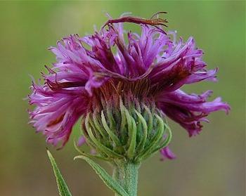kwiat z boku