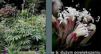 roślina+kwiaty