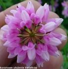 ułożenie kwiatów