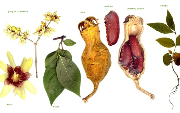 części rośliny