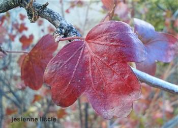 jesienią