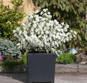 Kwiaty Ogrodowe Dość Pobieżnie O Wyglądzie I W Miarę Szczegółowo O